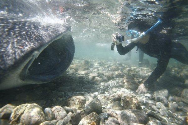 日期:大年初二. 時間:第一潛後SIT時. 當時同行之友在淺灘發現它後一心以為只是走失母鯨之小鯨 ... ... ...